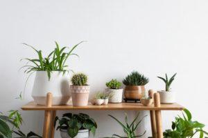 Scandinavian Interior Display of Cacti and Succulent Plants