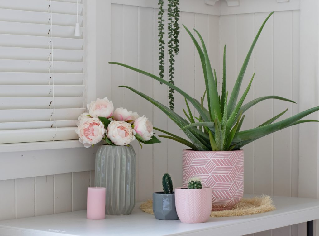 Tabletop Display of Flowers Cacti and Aloe Vera Plant