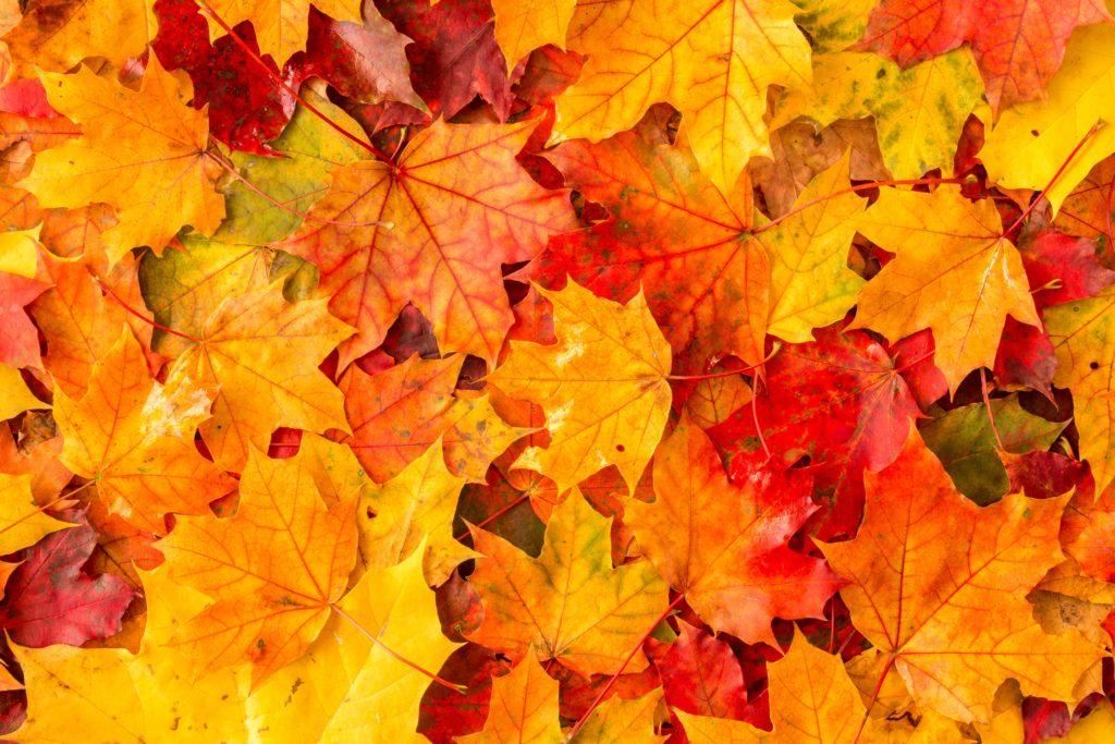 Fall Leaf Shower Curtains