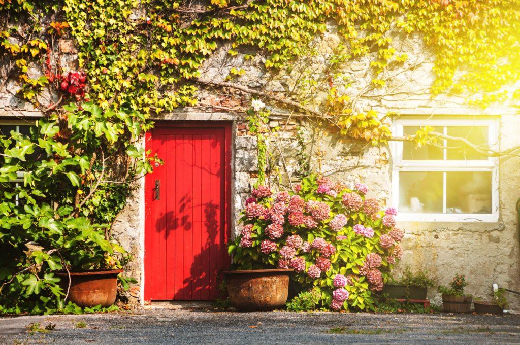 Red Door with Plants