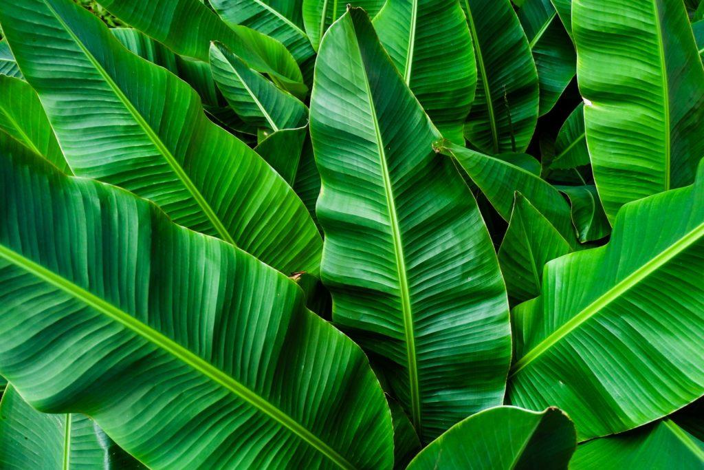 banana leaf shower curtains