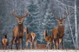 deer themed nursery