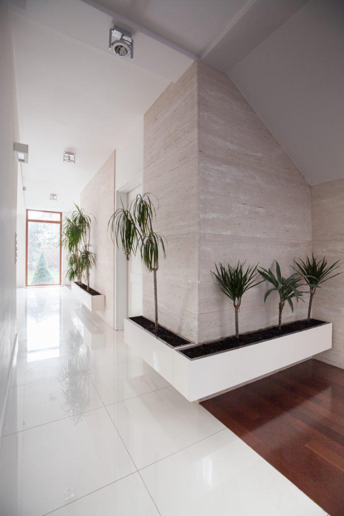 Green Plant Foyer