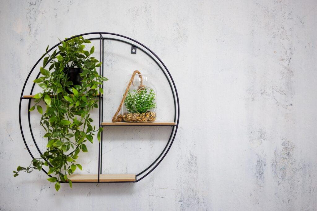Plants on Circular Shelf